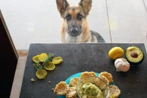 These Oven Fried Pickles are so tasty, even dogs can't resist!